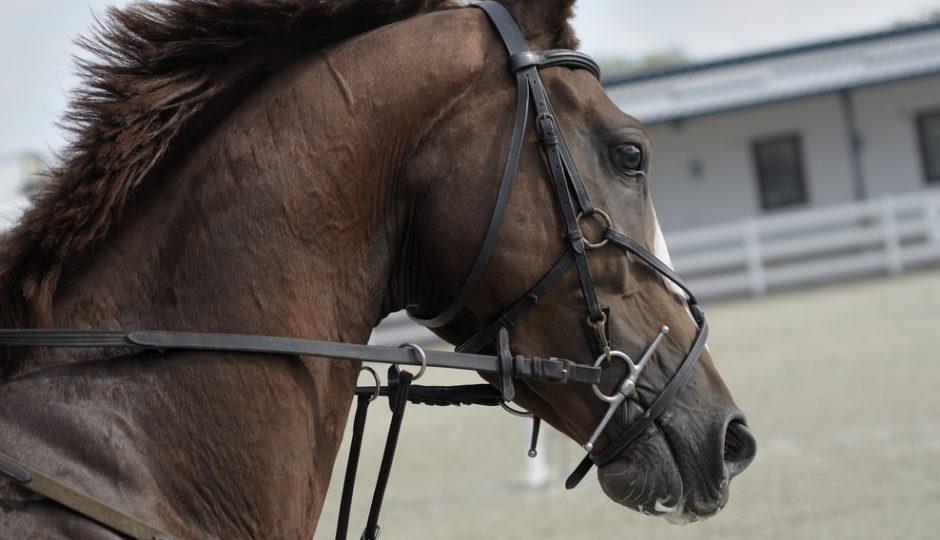 Randonnée route Napoléon à cheval